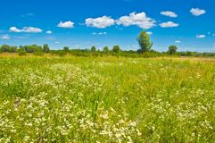 Meadow flowers in the spring steppe and a succession of clouds in the blue sky. Sweet aroma of spring Royalty Free Stock Image