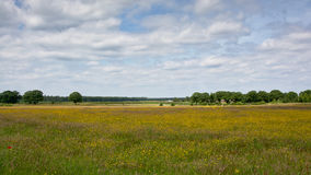 Meadow with flowers and trees Hoge Veluwe national parc, the Netherlands Royalty Free Stock Images