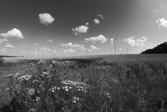 Meadow with flowers and turbines Stock Photography