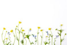 Free Meadow Flowers With Field Buttercups And Pansies Isolated On White Background. Top View. Flat Lay. Stock Photo - 117779420