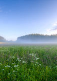 Meadow with fog Stock Image