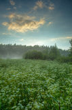 Meadow with fog Royalty Free Stock Photos
