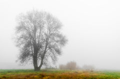 Meadow with Fog Stock Photos