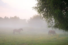 Meadow in the fog Royalty Free Stock Images
