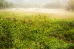 Meadow fog morning Royalty Free Stock Photos