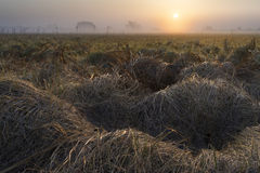 Meadow In Fog At Sunrise Royalty Free Stock Photography