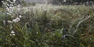 Meadow on a foggy morning and spiderweb. Stock Image