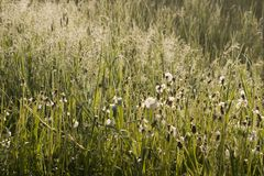 Meadow in the foggy morning . royalty free stock photography