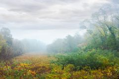 Meadow in the foggy park. Creepy nature scenery in autumn royalty free stock image