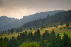 Meadow at foot of mountain. Meadow and forrest at foot of mountain viewed in a beautiful light stock photo