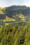 Meadow on forest. Maramures Mountains meadows on forests Royalty Free Stock Photos