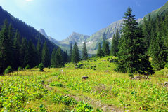 Meadow and forest Stock Photos