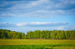 Meadow and forest. Meadow with lush grass, forest and sky with clouds Stock Photos