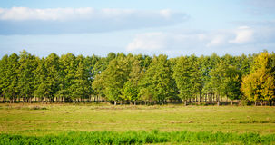 Meadow and forest. Meadow with lush grass, forest and sky with clouds Royalty Free Stock Photos