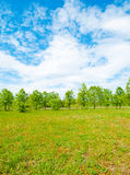 Meadow and forest Stock Photography