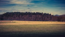 Meadow and forest in background Royalty Free Stock Image