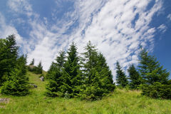 Meadow, forest and blue sky with clouds Royalty Free Stock Photos