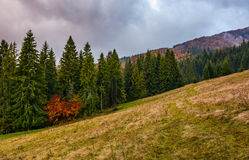Meadow among the forest on cloudy autumn day Royalty Free Stock Photography