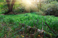 Meadow in forest Stock Photography