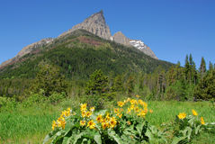 Meadow, forest and mountain Stock Photos