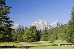Meadow, Forest, And Mountain Royalty Free Stock Images