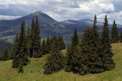 Meadow, forest and mountains. Bucovina, meadow, forest and mountains Stock Photos