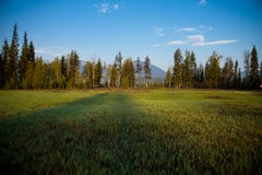 Meadow, Forest and Mountains, Montana. Morning Light in Glacier National Park Stock Photography