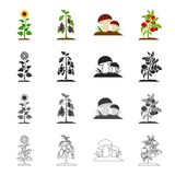 Meadow, forest, plot and other web icon in cartoon style.Raspberries, fruits, vegetables icons in set collection. Royalty Free Stock Image