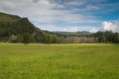 Meadow and forest, Sao Miguel, Azores Islands royalty free stock photos
