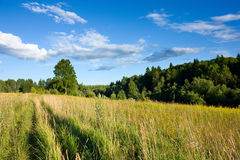 Meadow and forest under sunlight Royalty Free Stock Photo