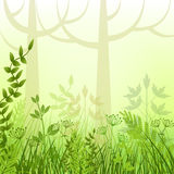 Meadow in forest Stock Photos