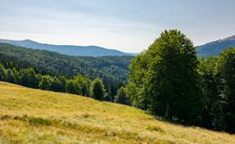 Meadow on the forested hill in summer mountain. Landscape. beautiful nature scenery on high altitude stock photo