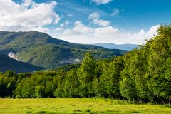 Meadow on a forested hillside in the morning. Beautiful landscape of Carpathian mountains Stock Photo