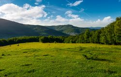 Meadow on a forested hillside in the morning. Beautiful landscape of Carpathian mountains Stock Photography