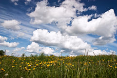 Meadow with fowers and blue sky Stock Image