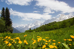 Meadow in French Alps Royalty Free Stock Images
