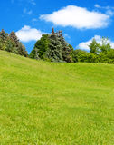 Meadow of fresh grass and trees . Stock Image