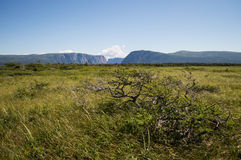 Meadow in Front of Western Brook Pond in Gros Morne National Park in Newfoundland Royalty Free Stock Images