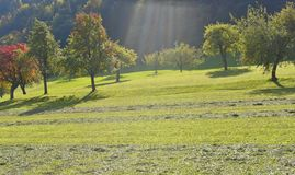 Meadow with fruit trees. In autumn with sun rays Stock Images