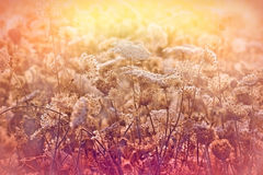 Meadow full of flowers in late afternoon Royalty Free Stock Photos