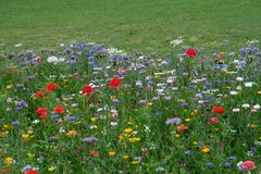 Meadow full of a variety of colorful wild flowers, England UK
