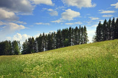 Meadow, fur-trees, clouds Royalty Free Stock Photography