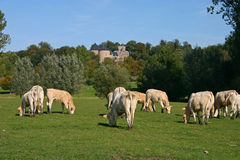 Meadow before Gaasbeek Castle Royalty Free Stock Images
