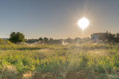Meadow getting watered against the sun rays. Stock Photo