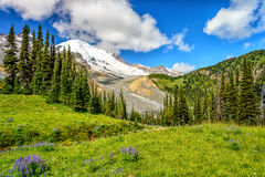 Meadow, glacier, forest and Mount Rainier Stock Photo