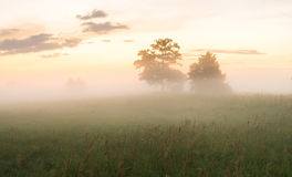 Meadow in the glow of the setting sun. Meadow in Poland, near Szczecin,meadow in the glow of the setting sun Royalty Free Stock Photos