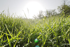 Meadow grass. Stock Images