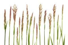 Meadow Grass Stock Image