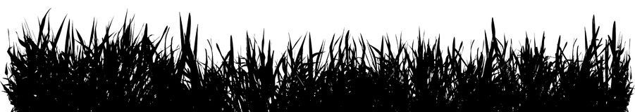 Meadow grass. Ideally for your use vector illustration