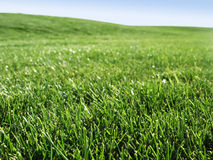 Meadow of grass. Meadow of fresh spring grass Stock Photo